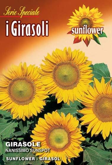 Sonnenblume Nanissimo Sunspot