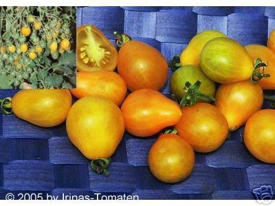 Tomate Gelbe Dattelwein