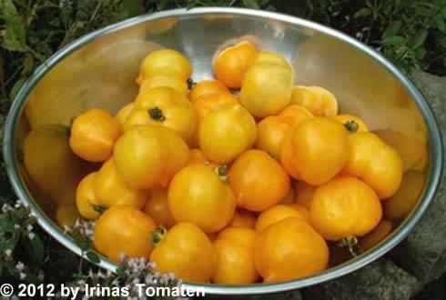 Tomate Anna Germann (Hermann)