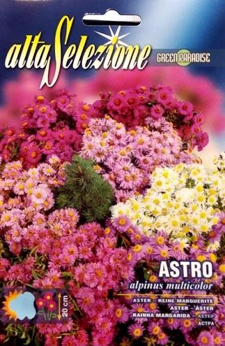Astern Alpinus Multicolor