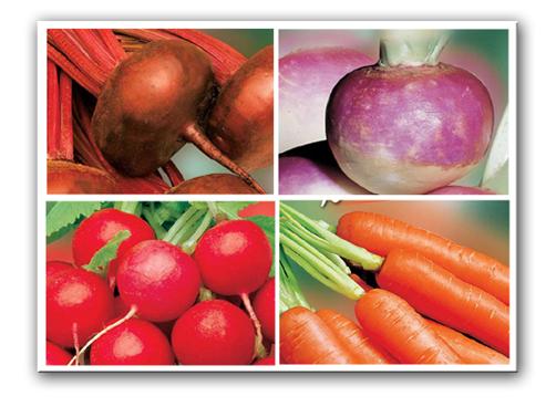 Wurzelgemüse & Zwiebel Samen