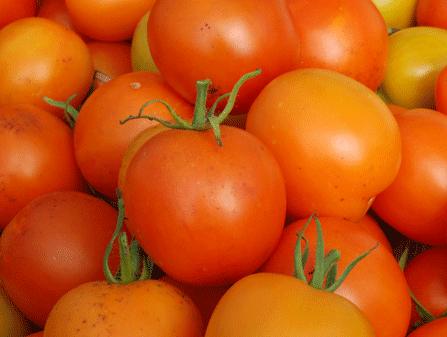 Tomaten Samen Orange