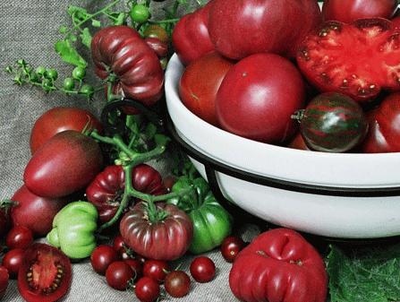 Tomaten Samen Dunkel