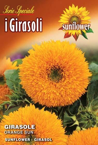 Sonnenblume Orange sun