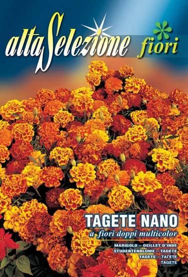 Studentenblume nano a fiori doppi mix