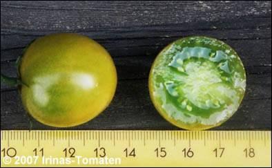 Tomate Green grape