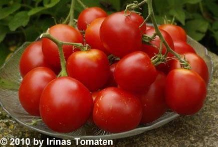 Tomate Lukullus