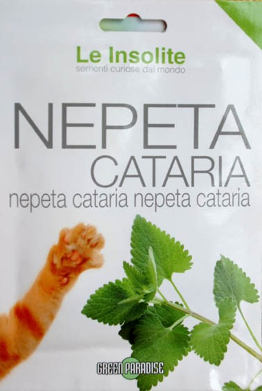 Echte Katzenminze (Nepeta cataria)