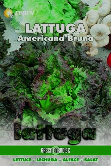 Salat Americana Bruna