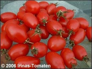 Tomate Sacharnaja sliva (aus Russ.: Zuckerpflaume)
