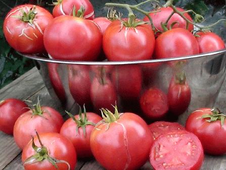 Tomaten Samen Rosa