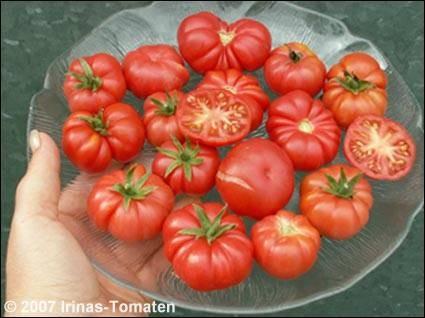 Tomate Trefle du Togo (Kleeblatt von Togo)
