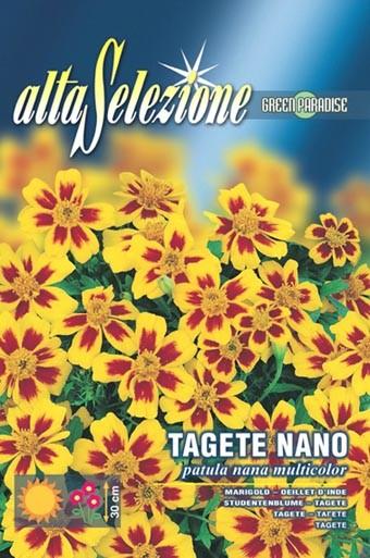 Studentenblume Patula nana multicolor