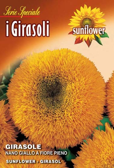 Sonnenblumen Nano giallo a fiore pieno