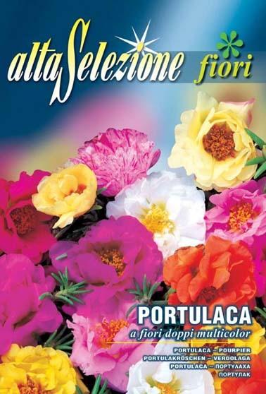 Portulakröschen a fiori doppi multicolor