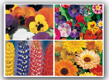 Blumen Samen