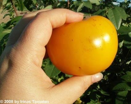 Tomate New Sun