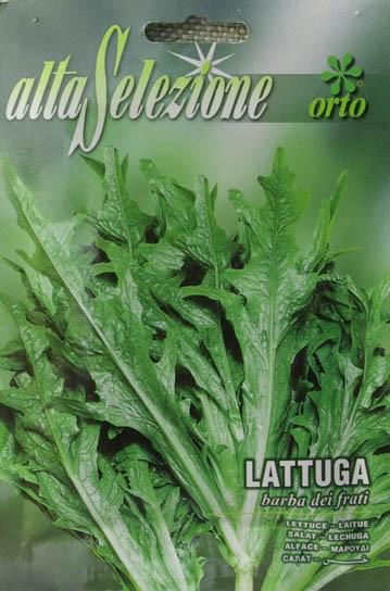Salat Barba dej Frati - Mönchsbart Salat