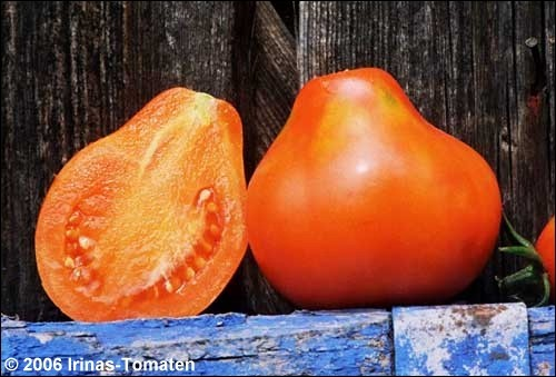 Tomate Siberian Pear
