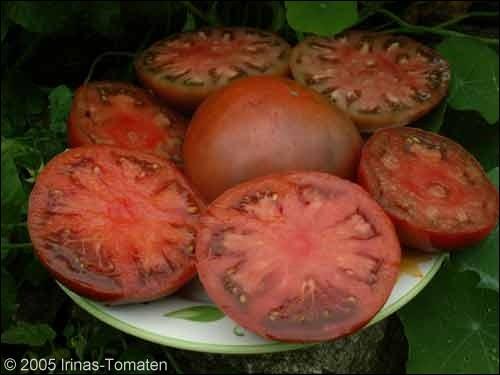 Tomate Uglitsch rotbraun