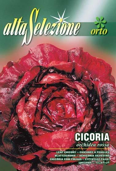 Blattradicchio Orchidea Rossa