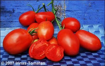 Tomate Lipezkij