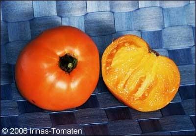 Tomate Hurma (Scharonis)