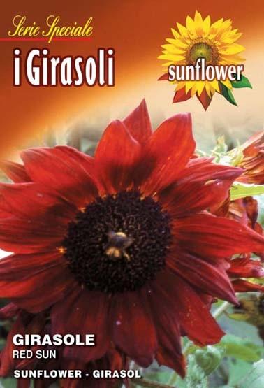 SonnenIblume Red sun