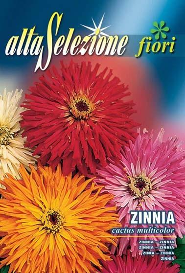 Zinnia cactus multicolor