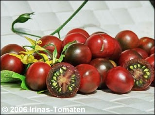 Tomate Schwarze Kirschtomate