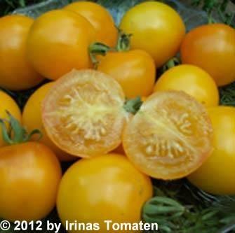 Tomate Blondköpfchen