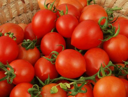 Tomaten Samen Rot