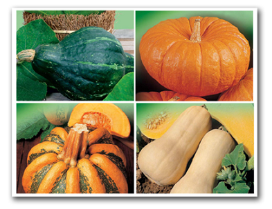 Kürbis-Zucchini-Melone Samen