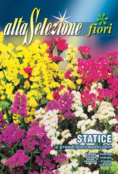 Statice Mischung a grandi fiori multicolor