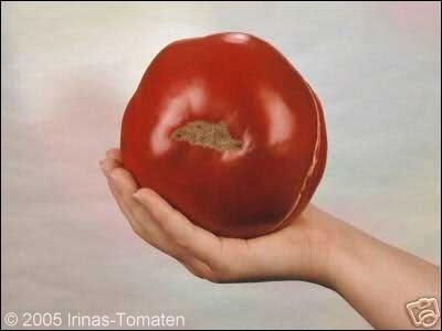 Tomate Schuntukskij Velikan (Riese aus Schuntuk)