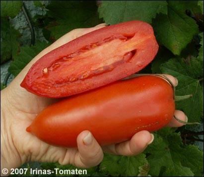 Tomate Hochloma