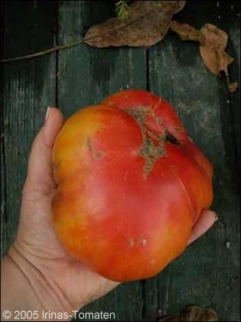 Tomate Pink Lemon