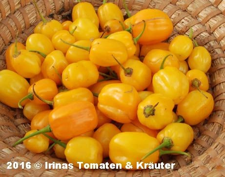 Habanero orange apple