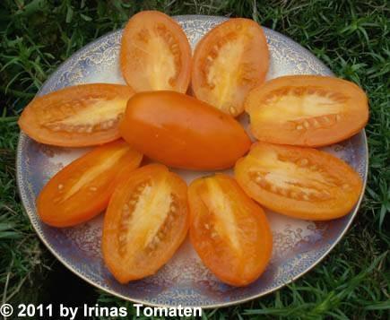 Liana orangevaja (Liane orange)