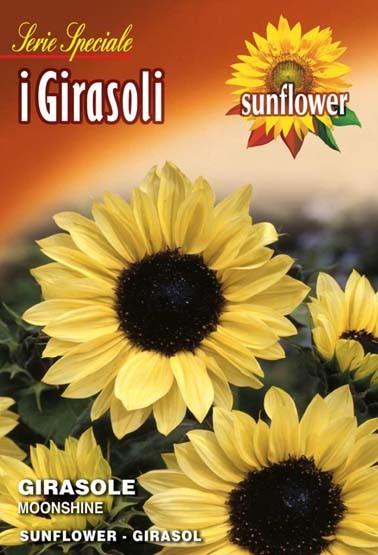Sonnenblume Moonshine