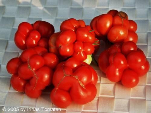 Tomate Reisetomate