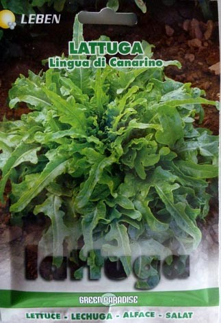 Salat Lingua di Canarino (Kanarienzunge)