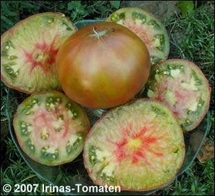 Tomate Ananas Noire (Schwarze Ananas)