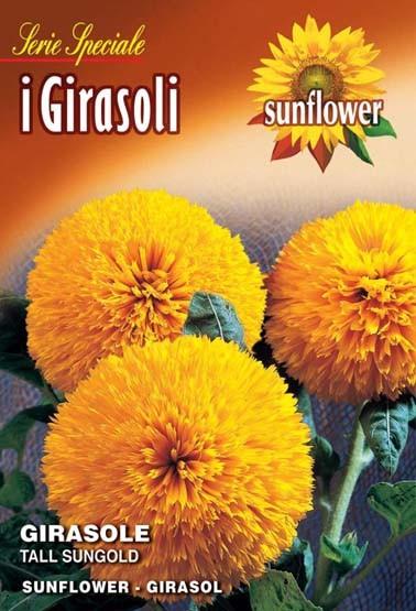 Sonnenblume Tall Sungold